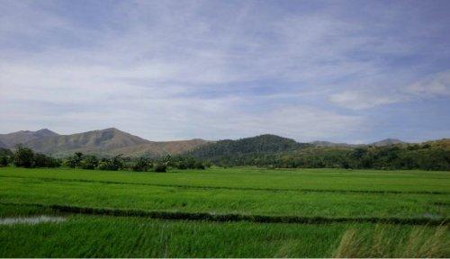 rural scene1