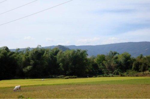 rural scene2