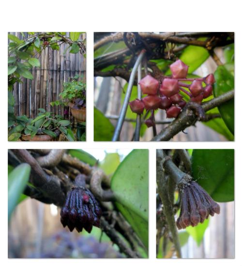 what's in a garden