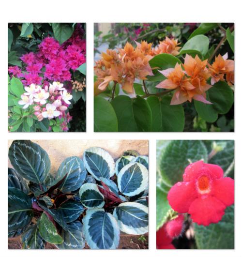 whats in a garden1