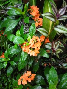 a hodgepodge of flowering plants from crossadra to lilies