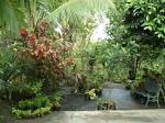 Our wild Garden in patar4