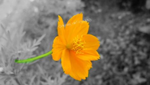 My first experiment on color splash.
